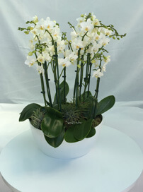 TD2 Orchid Display