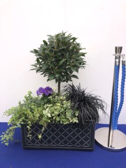 Plants in Trough for hire