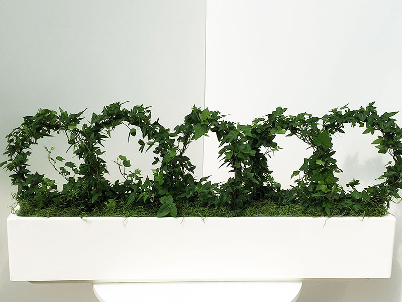 White Trough of Ivy Hoops
