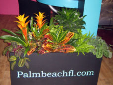 Eye Catching foliage planted into clients trough
