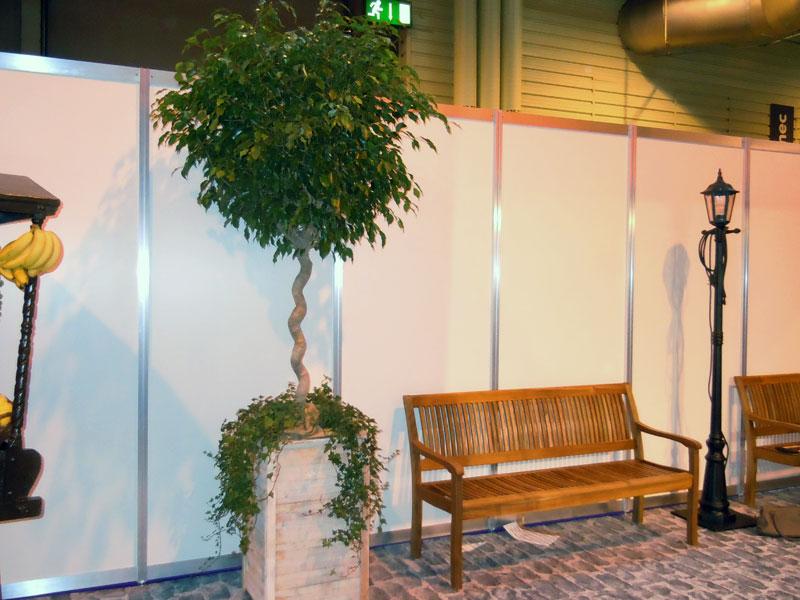 2.5m Ficus Tree