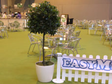 Bay Trees available from 1m up to 2.4m high