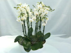 Reception Bowl of Orchids