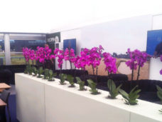 Stunning Pink Phalanopsis Orchid Screen