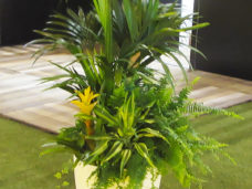 Kentia Palm with mixed foliage