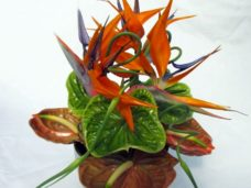 Centre Display Strelitzia