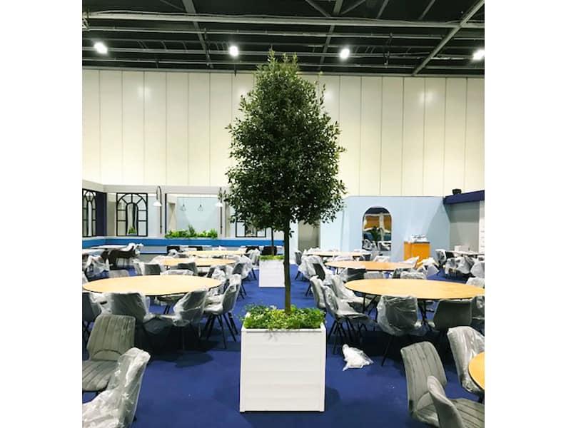 3.5m Tree