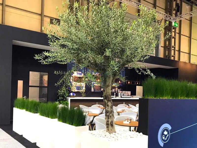 3.2m Olive Tree