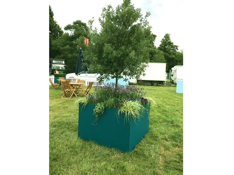 3m Oak Tree