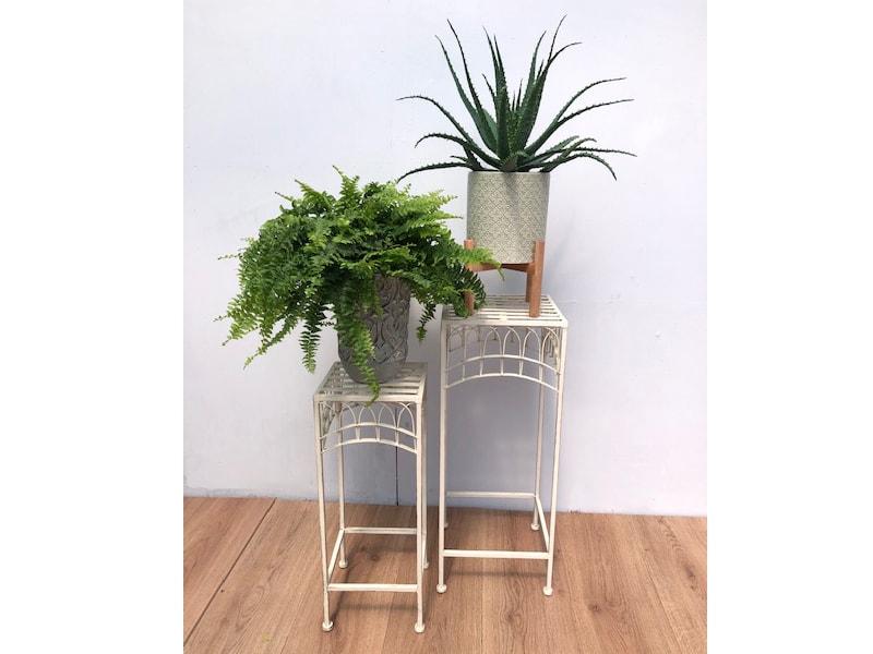 Fern in decorative pot
