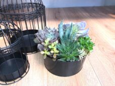 Table Bowl of Succulents