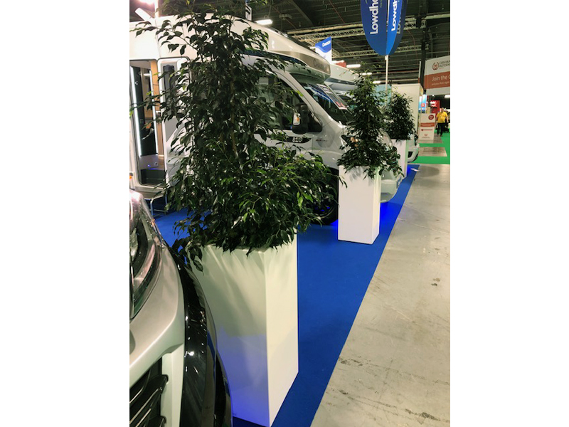Enhance your stand with Tall Ficus